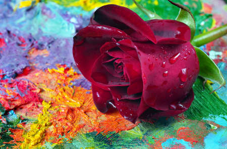 beautiful red rose on the artist's palette
