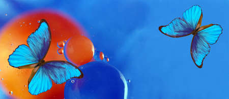 blue tropical morpho butterflies on abstract blurred background.