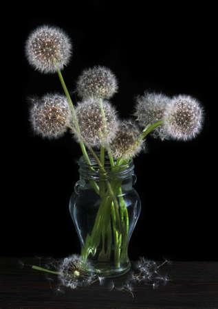 bouquet of fluffy dandelions in glass vase on black Фото со стока
