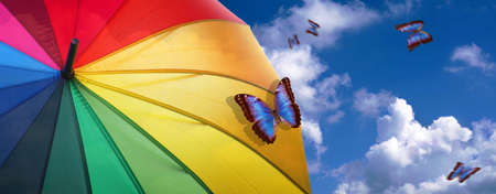 summer concept. good weather concept. colors of rainbow. colorful umbrella rainbow colors on blue sky background with clouds and bright tropical morpho butterflies.