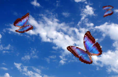 bright butterflies flying in the blue sky with clouds. flying blue butterflies. colorful morpho butterflies. copy spaces Фото со стока