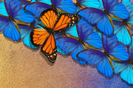 abstract background of colorful butterflies. bright blue morpho butterflies and colorful orange monarch butterfly.