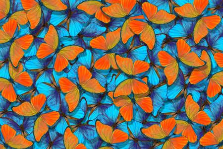 Butterflies Morpho. Flight of bright blue and orange butterflies abstract.