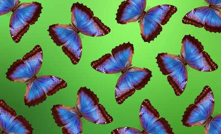 abstract pattern of bright blue tropical morpho butterflies Standard-Bild