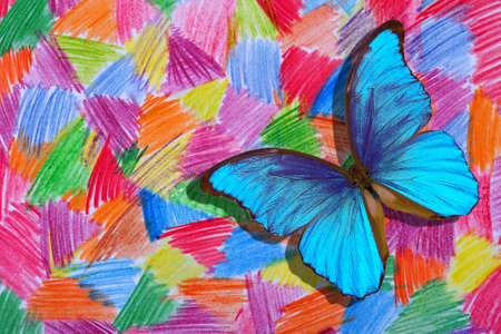 abstract drawing with colored pencils on paper. bright blue tropical morpho butterfly on a colorful background. Standard-Bild