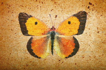 old paper texture and orange butterfly. grunge background with butterfly close up. Standard-Bild