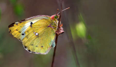 colorful yellow butterfly on a twig close-up Standard-Bild