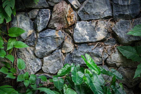 botanical gardens: Vintage Stone walls in the botanical gardens and plants. Stock Photo