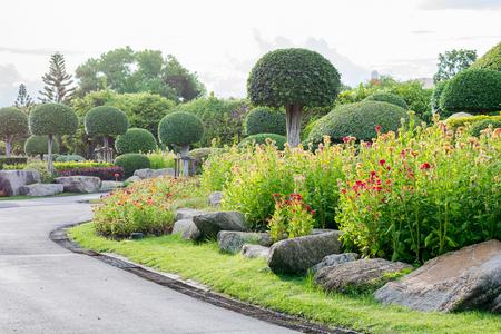 cockscomb: Cockscomb flower garden with beautiful plants