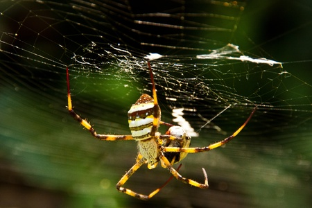 Tropical spiders Stock Photo - 9389290