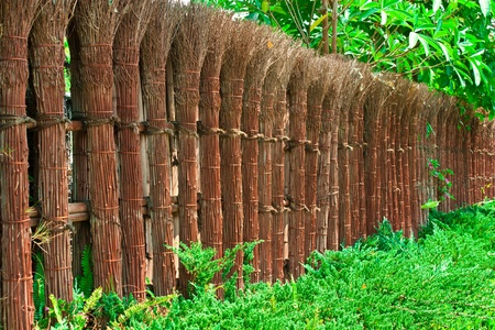 Natural fence photo
