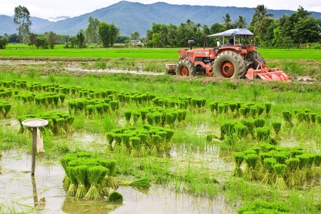 rural scenes: Paddy Stock Photo