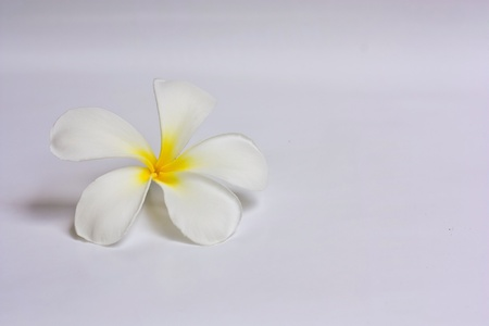 Lan Thom Flowers. photo