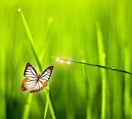 climate morning: Butterfly grass. Stock Photo