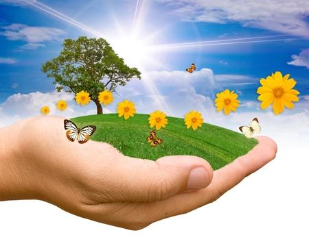 Hände halten einen Baum.