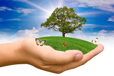 Hands holding a tree. Stock Photo - 11814933