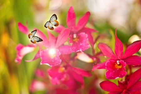 Orchids and butterflies photo