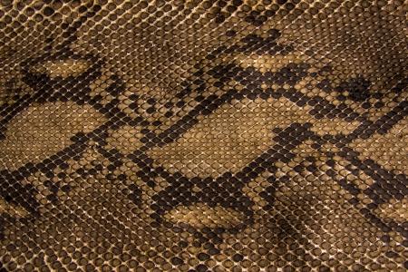 Achtergrond slangenhuid. Stockfoto