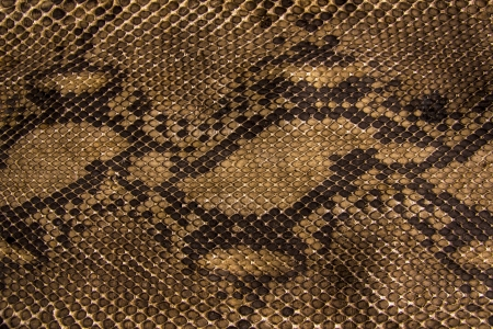 Background snake skin.