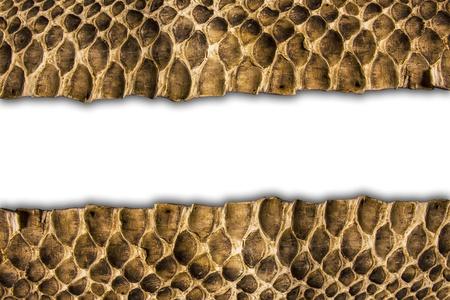 Background snake skin.