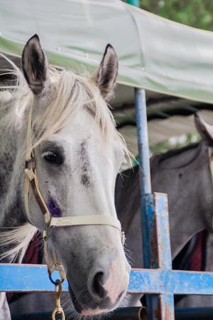 racehorses: Racehorses on the Truck