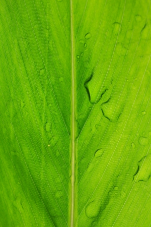 Green leaf texture  background with waterdrop photo