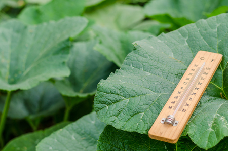 termometer: Wooden thermometer on pumpkin leaves