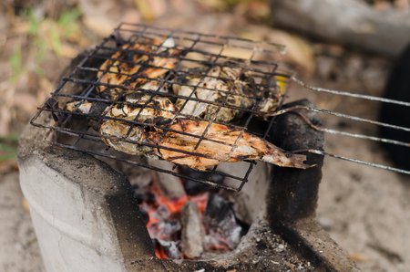 striped snakehead fish: Striped snakehead fishes grilled with hot cinder in concrete stove Stock Photo