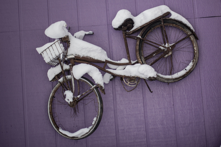 Old rusty bicycle covered by snow hang on a purple wall.