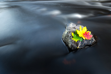 Colorful autumn leaves by the river. Stok Fotoğraf