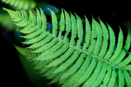 Green fern leaf with a beautiful pattern.