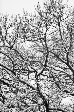 Snow storm at Central Park, New York City. Black and White.