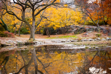 Colorful autumn leaves and its reflection in the pond in Central Park, New York City.