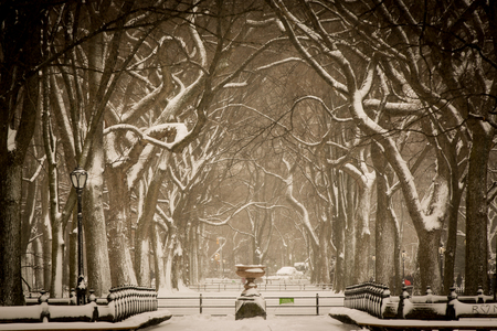 Snow storm at Central Park, New York City. Sepia toned.
