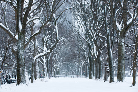Snow storm at Central Park, New York City.