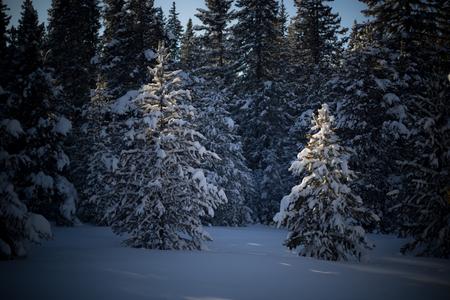 A beautiful winter landscape snow covered tree. Stok Fotoğraf