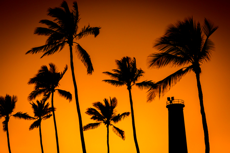 Silhouette of coconut trees and lighthouse sunset light
