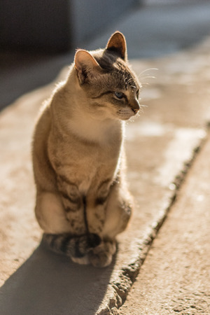 scolded: cat in warm sunrise
