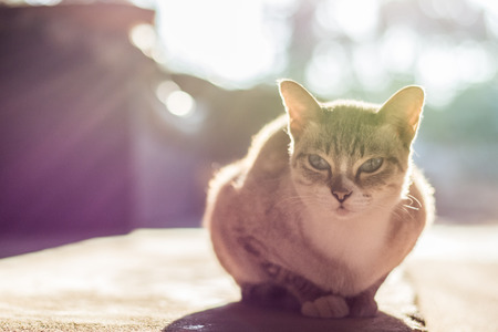 scolded: Cat in the morning