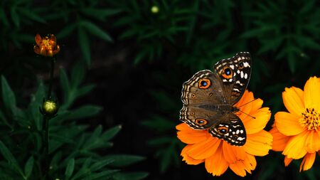 A butterfly on flowers in the garden. Banque d'images - 135489910