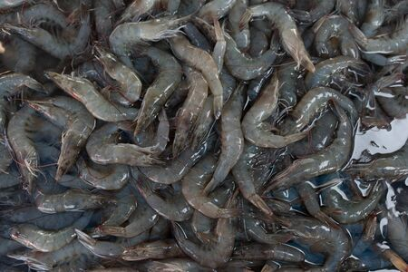 Fresh shrimp from fresh market in Thailand that people can buy at cheap price Banque d'images - 135489771