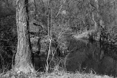 Monochrome photo of dormant trees growing alongside a creek system in Olathe, Kansas.