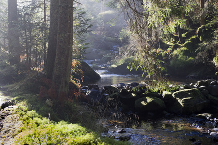 bathed: Mysterious forest river bathed in autumn sunshine