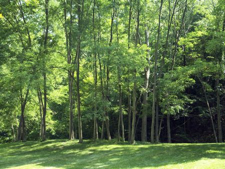 park trees Reklamní fotografie