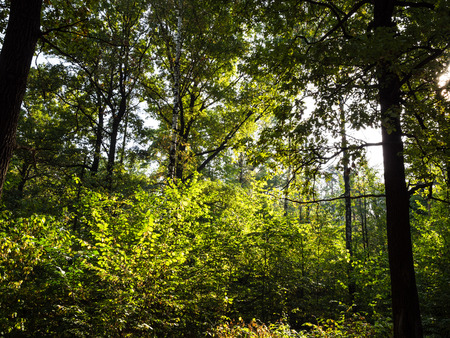 dense undergrowth in forest in sunny day at the beginning of autumn