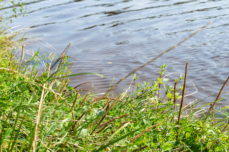 green grass on coast of Big Academichesky (Large Sadoviy) pond in Moscow city in sunny september day 版權商用圖片
