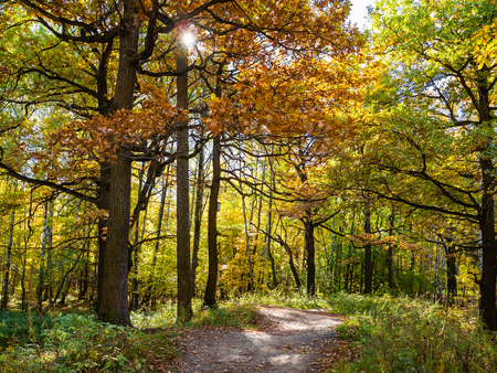 path between oak trees in forest of urban park in sunny autumn day Reklamní fotografie