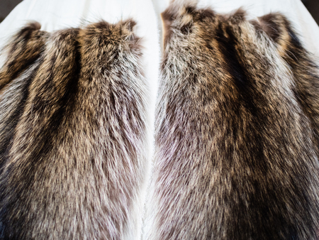 workshop of manufacturing of coats from raccoon fur - fur pelts stitched to the textile layout close up Stockfoto