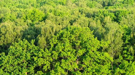 aerial view of oak grove in green forest illuminated by sunset sun in summer evening Imagens