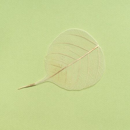 dried fallen leaf on background from green olive color paper